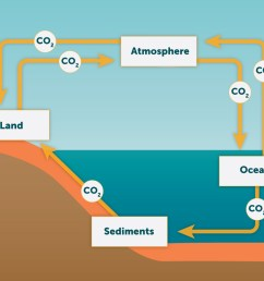 show the biogeochemical cycle of carbon  [ 1215 x 807 Pixel ]