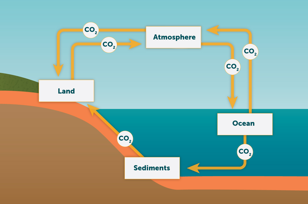 hight resolution of show the biogeochemical cycle of carbon