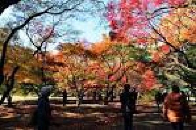 Zenkoku Koyo photo02