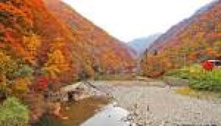 Tohoku koyo photo01