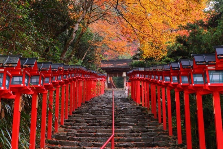 Japan Fall Leaves Calendar 2019 Seasonal Forecast And Best