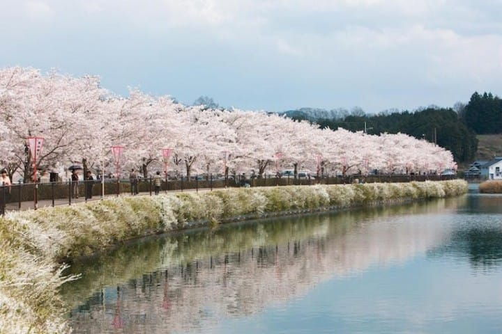 diagram the parts of cherry blossom tree how to show loop in sequence japan s blossoms 2019 forecast and best spots matcha