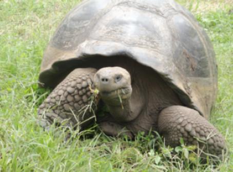 Galapagos Spezial - Der Weg der Galapagos Riesenschildkröte