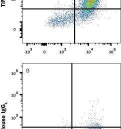 detection of tim 4 in hek human cell line transfected with human tim 4 [ 739 x 1470 Pixel ]
