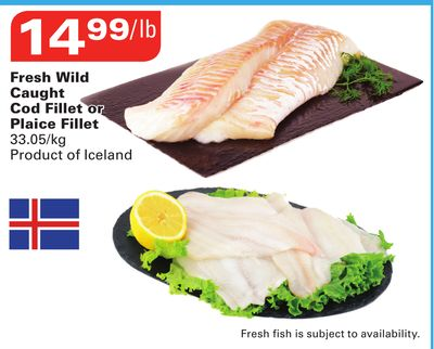 Fresh Wild Caught Cod Fillet or on sale Salewhaleca