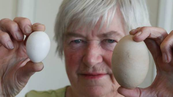 Nelson woman shocked by giant egg Stuffconz