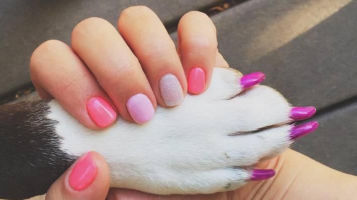crazy new pet trend