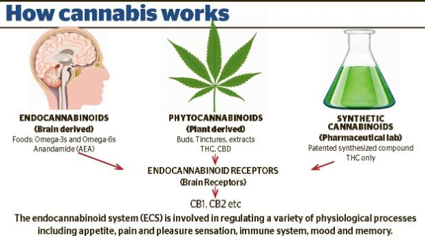 It's believed that the widespread physical and phychological effects of cannabis work on the body by targeting the ...