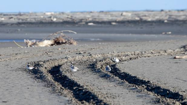 Tyre tracks cut through Waikanae Estuary.