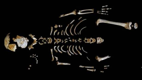 Skeleton of the Neanderthal boy recovered from the El Sidron cave, Spain.