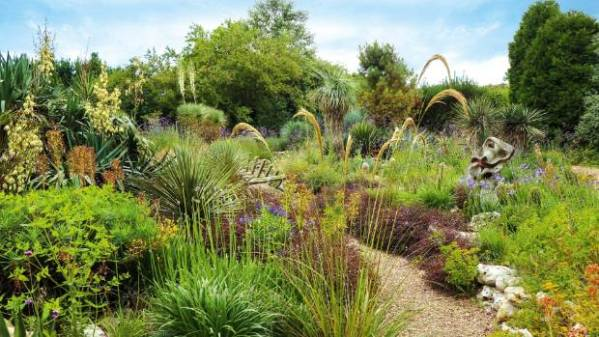 plants dry gardens