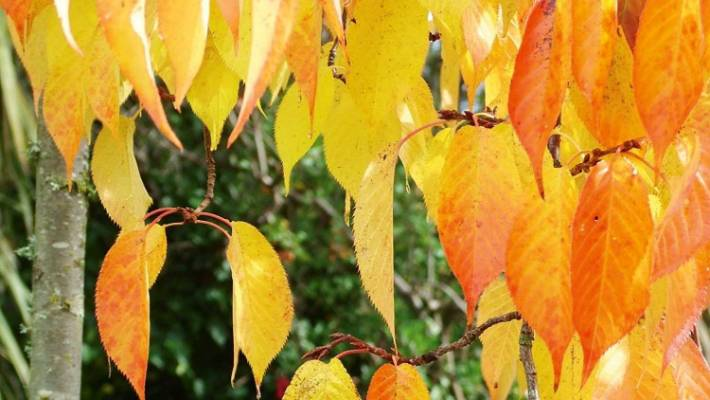 best trees for autumn