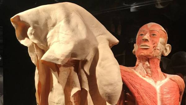 Life Insurance Lessons Body Worlds' Exhibition Of