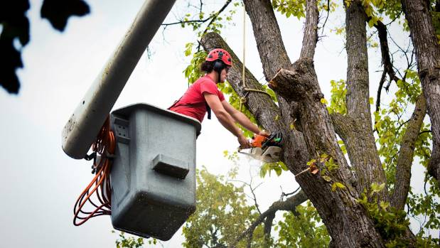 Finding a reputable arborist requires doing your research.
