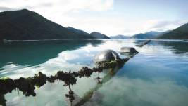 Ocean acidification will be included in the aquaculture chapter of the Proposed Marlborough Environment Plan rather than the climate change chapter.