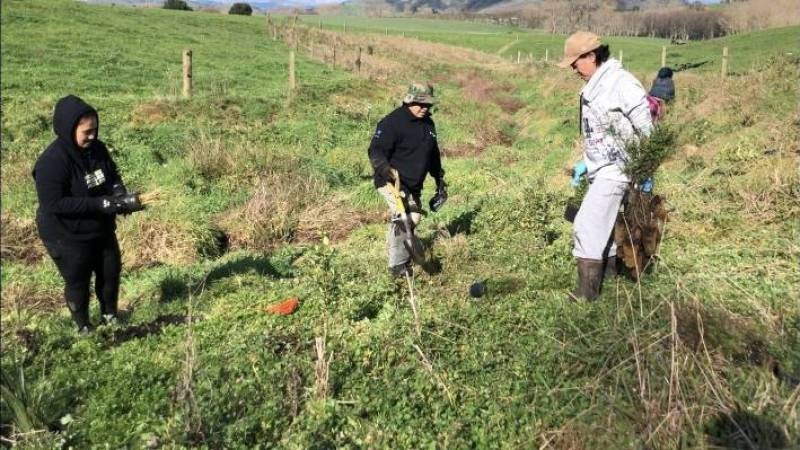 Vanessa Kaleopa, Quinn Cueto and Rosemary Haimona plant trees closer to the water in the gully at Rosebrae Farms.