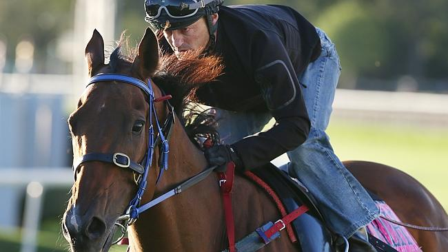 Damian Browne aboard Queensland's favourite son, Buffering. Picture: Peter Wallis
