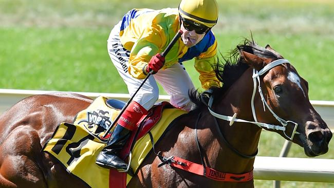 Rare breed: Danny Curran and his $750 filly The Big Dance are a battler-done-good story,