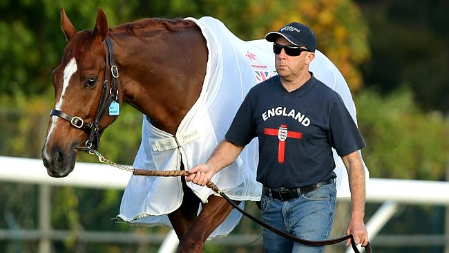 English veteran Red Cadeaux will take it easy this weekend. Picture: Gregg Porteous