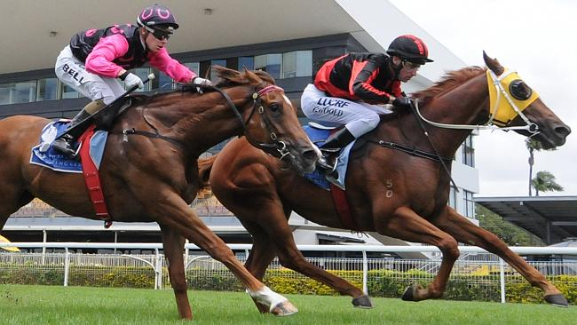 In The Sky Rocket (black and red silks) wins in Brisbane but not the race in question whe