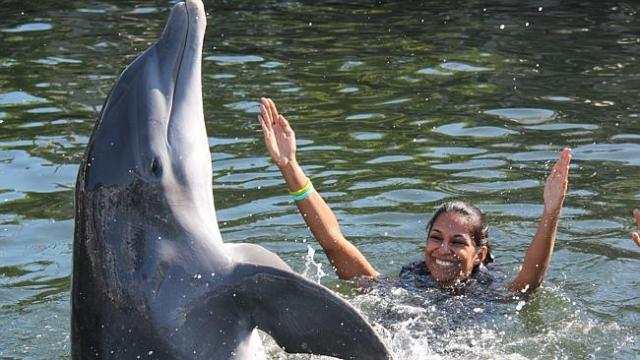 Nalisha enjoying the company of a dolphin in the US. Picture: Supplied
