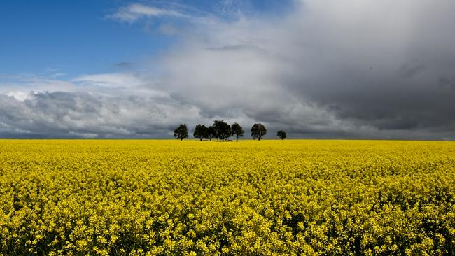 Two farmers are locked in a court battle over alleged genetically modified canola contamination.