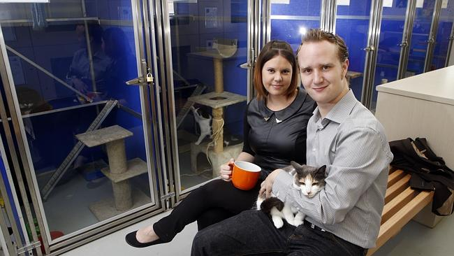 Anita and Myles Loughran are about to set up Australia's first cat cafe in Melbourne.