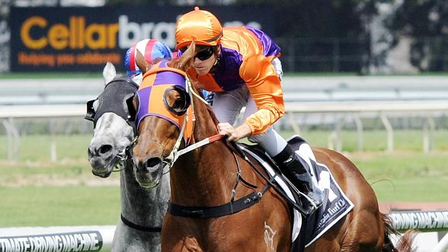 Our Boy Malachi returns in the Hall Mark Stakes. Picture: Simon Bullard