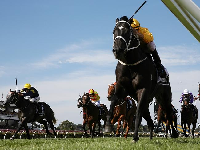 Newmarket Handicap winner Brazen Beau has been nominated for both the King's Stand and Go