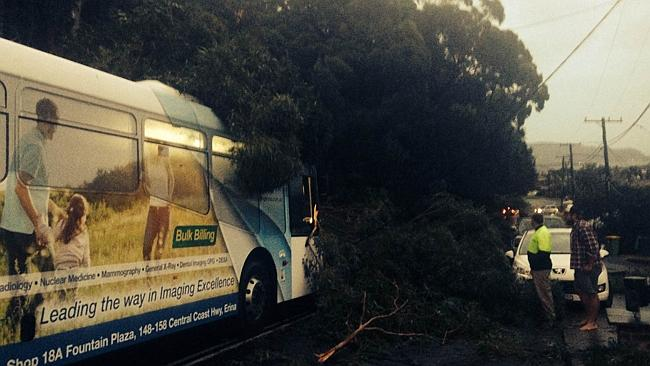 A tree fell accross a bus in Steyne Rd, Saratoga, on the NSW Central Coast. Picture: Carl