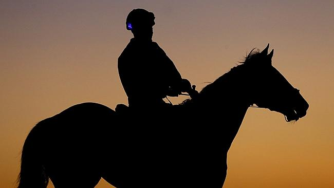 Allez Eagle during trackwork at Doomben. Picture: Darren England
