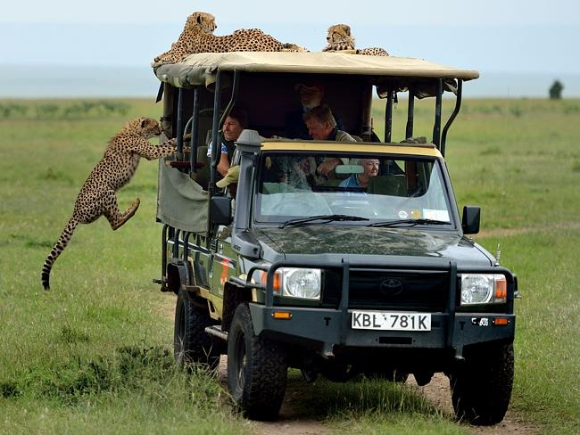 All aboard! Picture: Caters News
