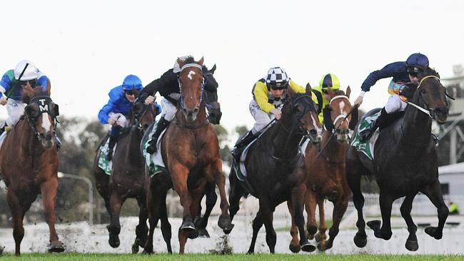 Racing Queensland stewards do not wish to reveal at this stage the cobalt levels Vimzig a