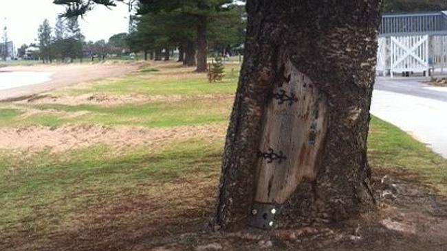 Redcliffe locals and visitors are trying to guess how Gollum from Lord of the Rings came to make his home in a tree.