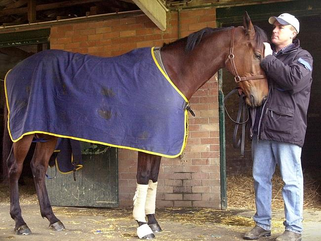 Trainer John O'Shea with 'Private Steer'.
