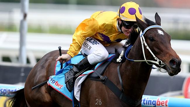 Peter Moody will be represented by Sino Eagle in the Wangoom Handicap. Picture: Tim Carra