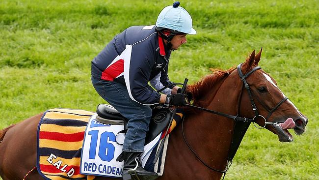 2011 Melbourne Cup runner-up Red Cadeaux works at Werribee. Picture: Colleen Petch