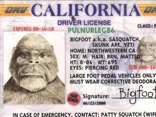 Wanted ... for distracting drivers. Bigfoot has been blamed for causing a car to crash into a ditch.