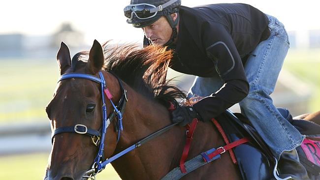 Damian Browne takes Buffering for a trackwork sesssion. Picture: Peter Wallis