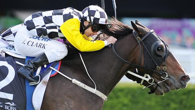 High Midnight has been a firmer in betting on the Queensland Derby. Picture: Simon Bullar