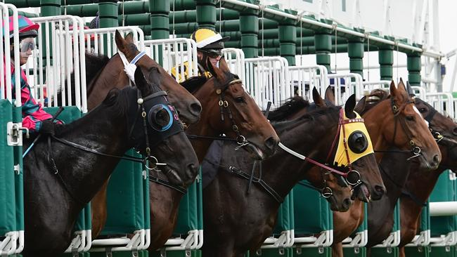 Preliminary tote figures suggested wagering turnover at Geelong on Tuesday was down on av
