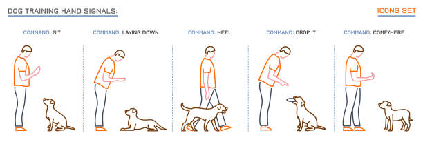 best dog training commands