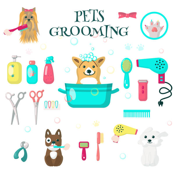 best grooming for dogs