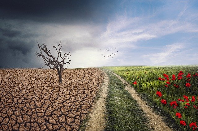 Climate Change resilience and Eco Anxiety Workshop Free Learn more here