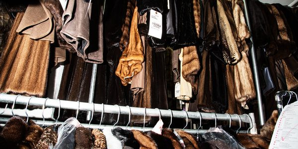 San Francisco BANS the sale of fur