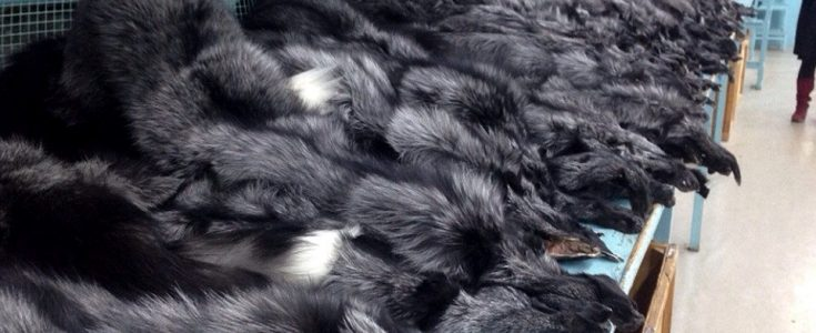 'Morally bankrupt' fur trade in financial crisis