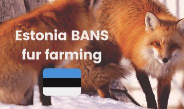 Victory! Estonia bans fur farming.