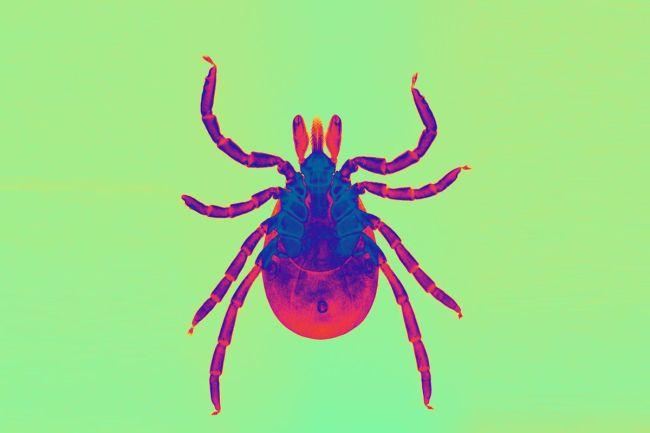 Chronic Lyme disease: Fake diagnosis