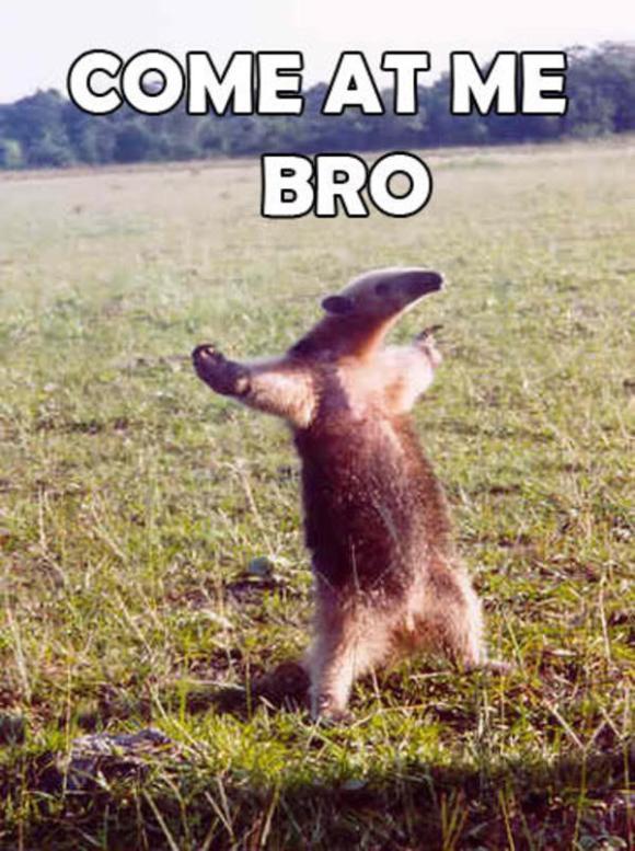 "AIER: The ""Debate me, bro!"" anteater"