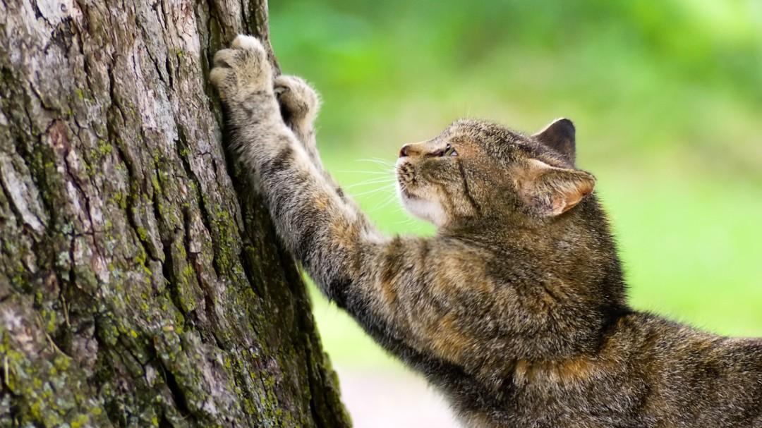 Danskerne er trætte af fritgående katte